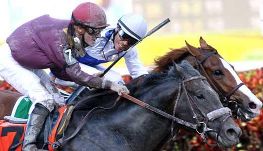 news-dialed-in-Copyright-2011-Horsephotos.com_