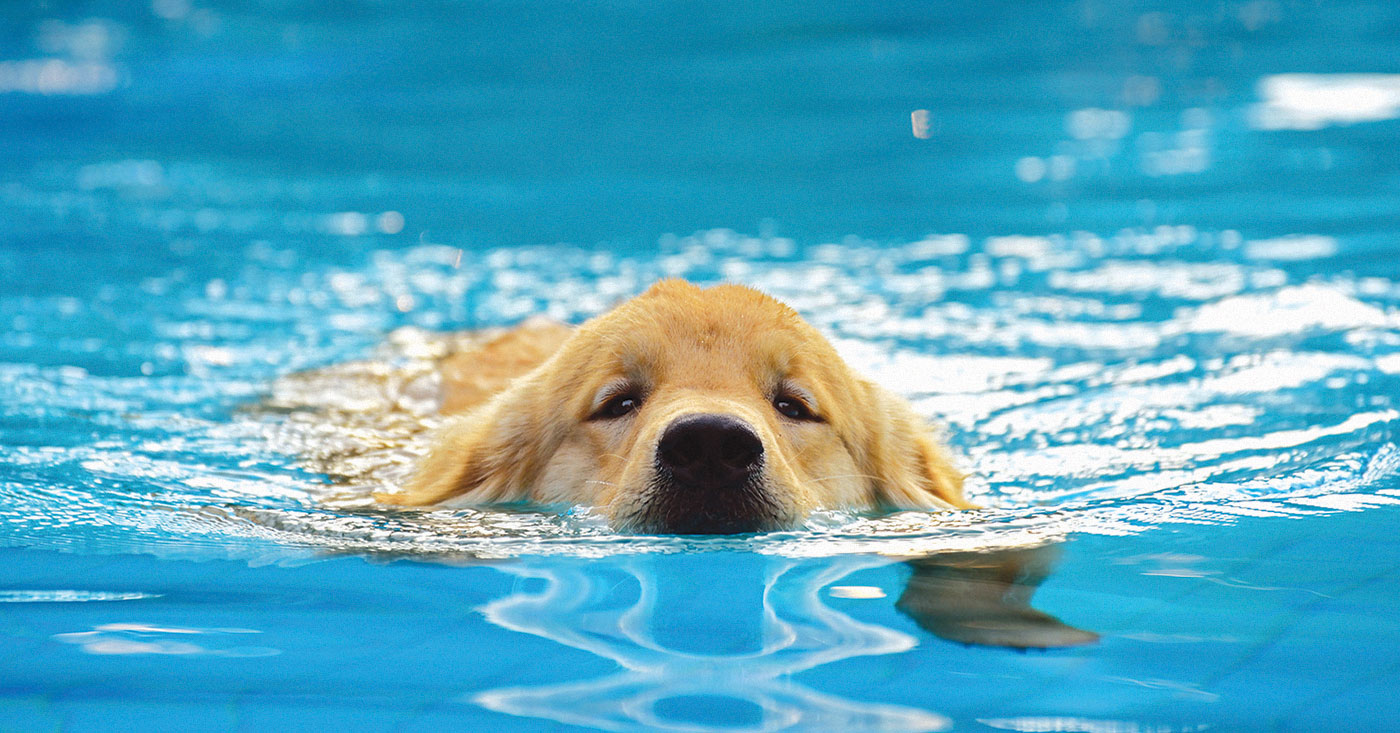 Fourth Annual Dog Swim For Livestrong Leo Weekly