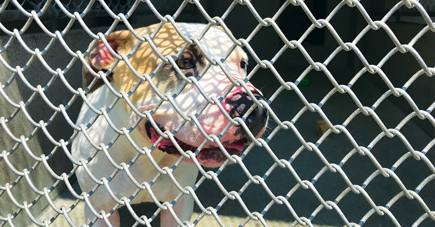 City Budget Cuts Pressure Animal Shelter Leo Weekly
